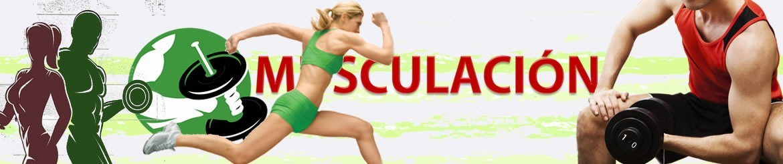 Fitness - Musculación