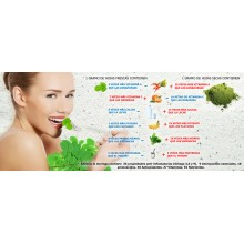 Moringa BIO | Natur Green | 90 Cáps. | 1050 mg | Gran Aporte en Vitaminas y Minerales - Producto ideal para Veganos